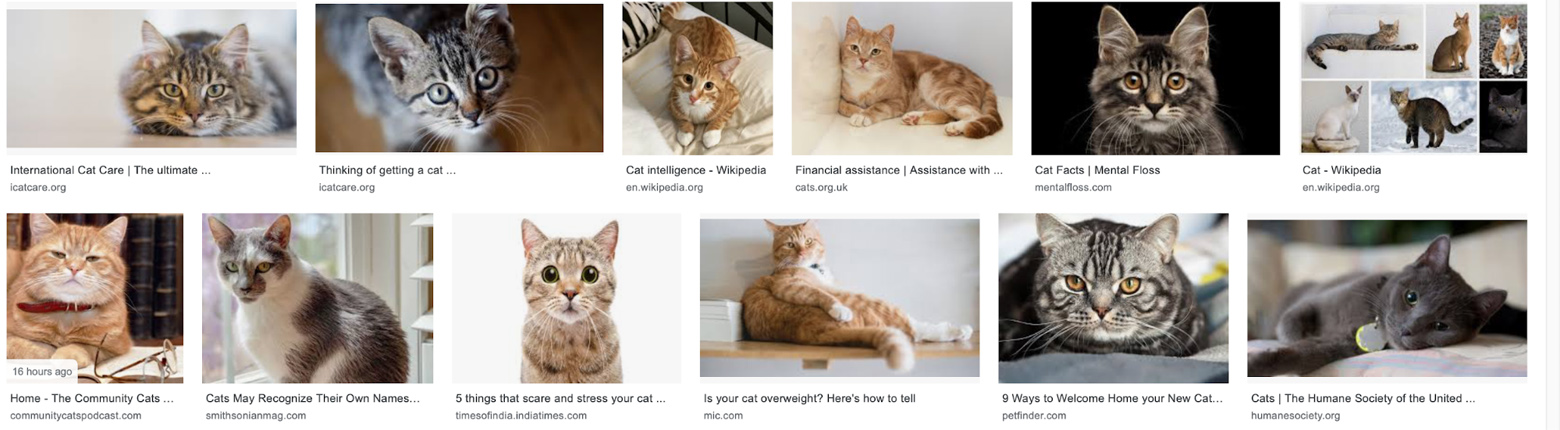 Cat Knowledge Card Image